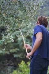 Bacco per far cadere le olive
