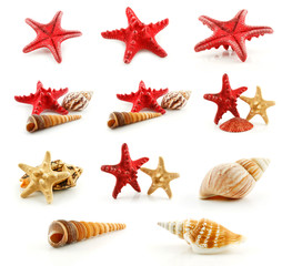 Set of Seashells (Starfish and Scallop) Isolated on White
