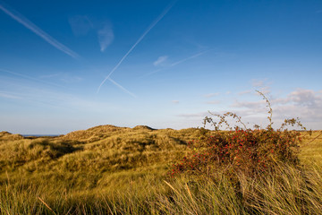 Sand dunes with beach grass and pink bottle