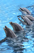 roleta: five dolphins