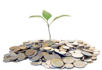 growing tree from money soil