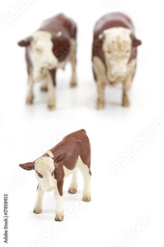 bovins miniature