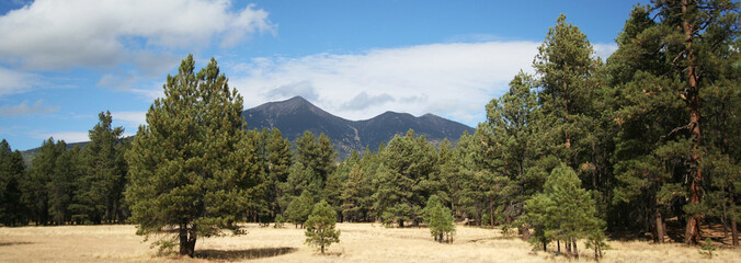 A View of the San Francisco Peaks Through the Pines