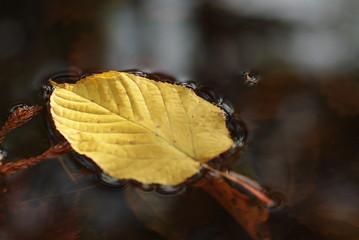 水に浮く黄色い葉