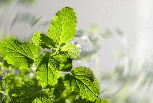 Fototapeten,hintergrund,gesund,grün,natur