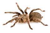 spider  poison poster