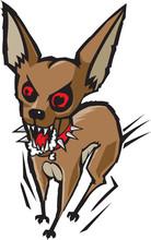 Szalony Chihuahua
