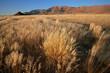Grassland landscape, Brandberg mountain, Namibia