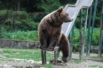 orso nel parco