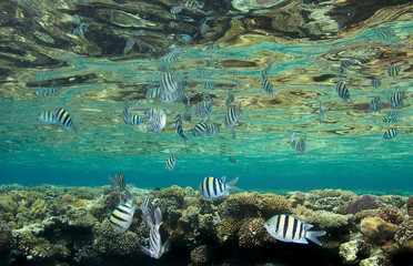 Photo  of fish and corals