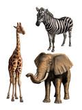 Wildlife I poster