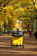 Central Park in deep autumn.