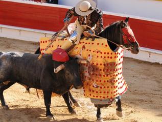 Picador & Bull