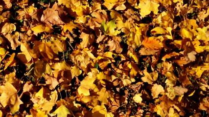 Wonderful autumn leaves - cran camera