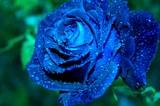 Fototapeta kwiat - roślina - Kwiat