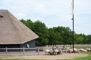Dutch sheep fold