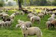 landwirtschaft - 17978450