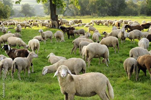 Leinwanddruck Bild landwirtschaft