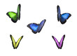 Colourful butterflies with clipping paths