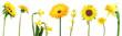 set of yellow flowers