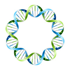 DNA Strands on circle. Vector.