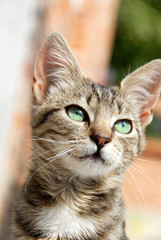 Young mixed-bread cat portrait