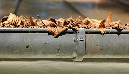 Laub in der Dachrinne, Regenrinne, Blätter, Herbst