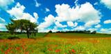 Vibrant Poppy Field poster