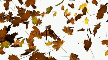 Herbs, fallende Blätter mit alpha kanal, 1080