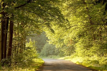 Summer forest road in the early morning