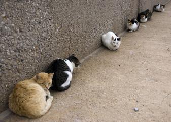 Row of stray cats