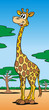 Giraffe in der Savanne