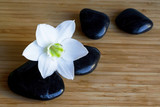 Spa black stones with white flower