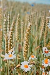 Getreide mit Blumen