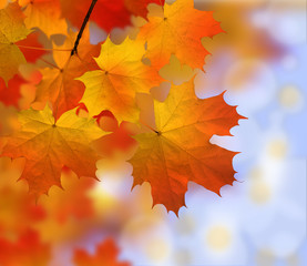 autumn - leaves - colors