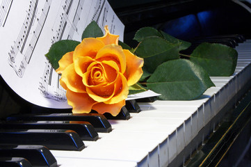 rose on  musical note