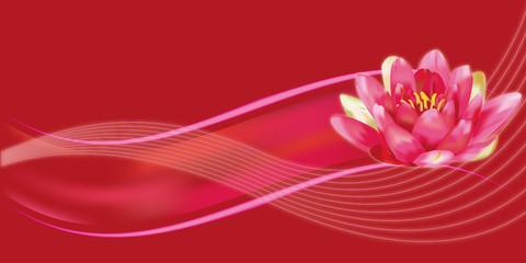 ninfea con sfondo rosso