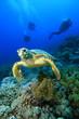 Leinwanddruck Bild - Hawksbill Turtle and Scuba DIvers