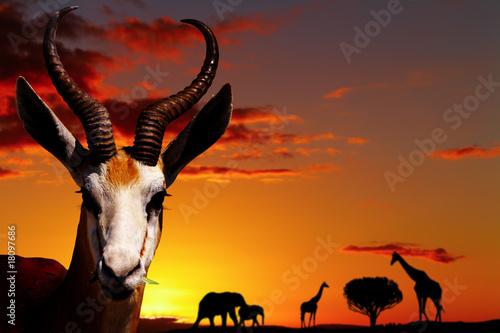 In de dag Antilope African nature concept