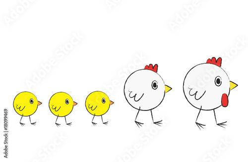 """""""famille de poule"""" photo libre de droits sur la banque d ..."""