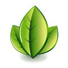 symbole feuilles
