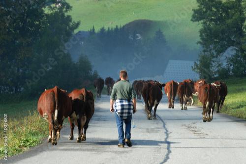 Papiers peints Vache vacher des alpes