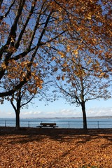 Bodensee Herbst 3