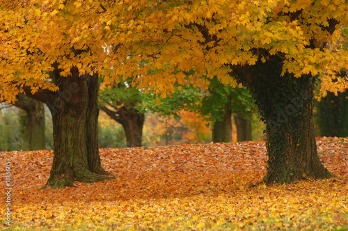 canvas print picture autumn path