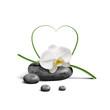 Quadro Orchidee 22551