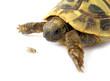 Tortoise turtle baby