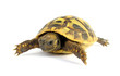 Turtle tortoise baby