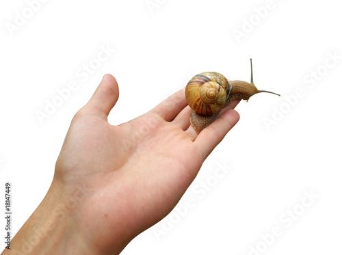Snail life