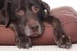 Old sad dog