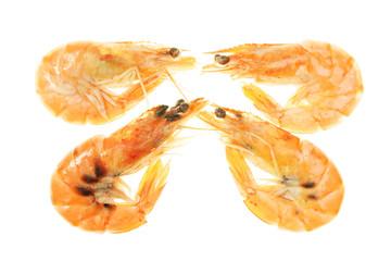 Four crevettes